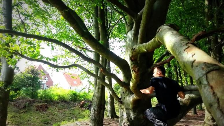 qaudromanus tree